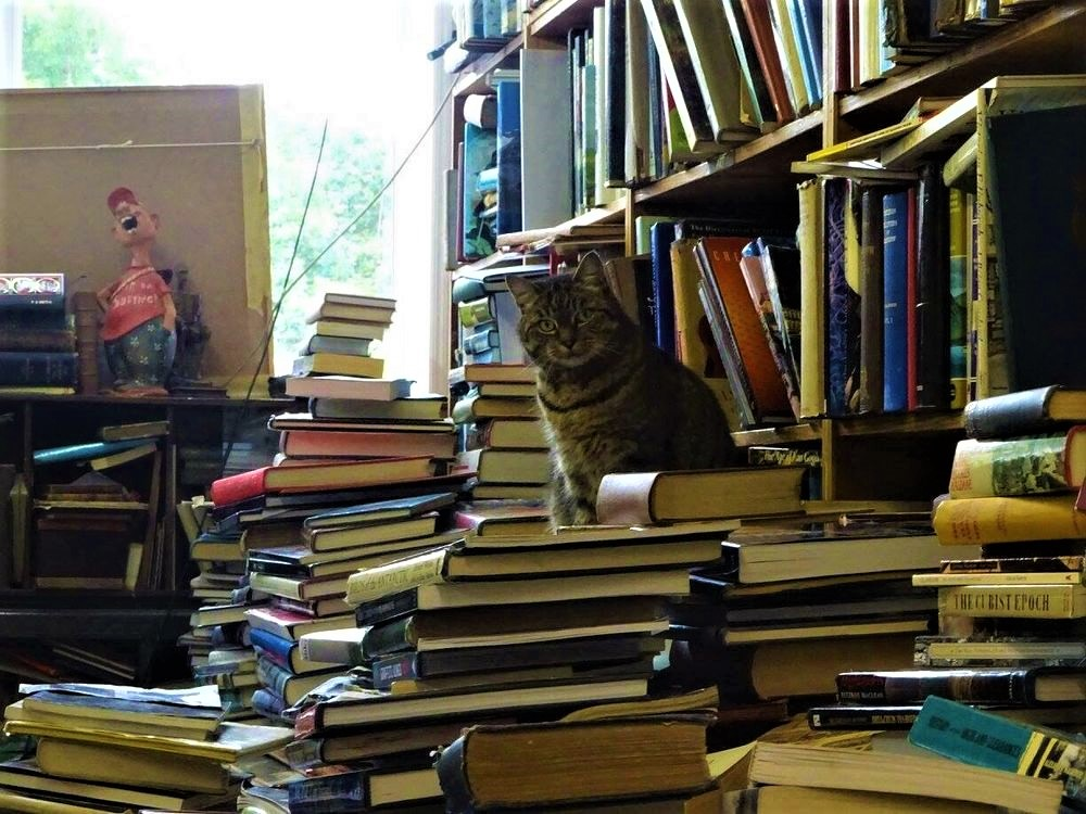 Voltaire & Rousseau Booksellers' cat second hand & antiquarian bookshop | Glasgow West end | we buy your books